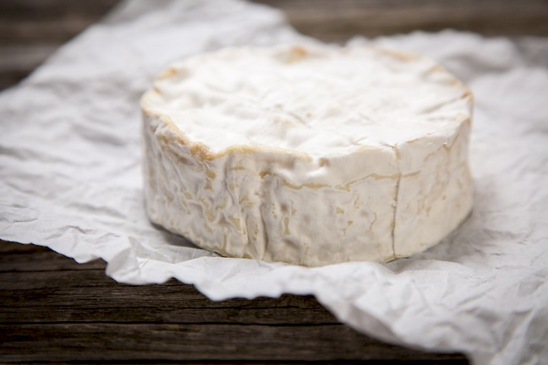 Homemade camembert cheesemaking